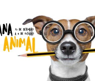 noticia-semana-do-animal-h